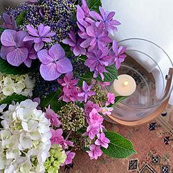 お花のある暮らし/紫陽花/LSA/賃貸/賃貸インテリア...などのインテリア実例 - 2021-06-08 12:41:12