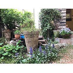 玄関/入り口/2018.4.24/植物のある暮らし/手作りの庭/模擬石貼り外壁...などのインテリア実例 - 2018-04-24 20:23:50