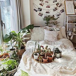 ベッド周り/一人暮らし/観葉植物/多肉植物/ツタ系植物...などのインテリア実例 - 2020-01-22 22:24:15