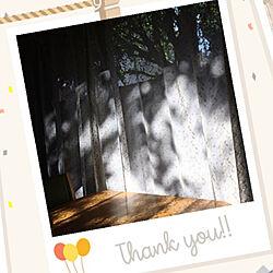 木漏れ日/光と影/西陽の窓辺/大きなイチョウの木/参道沿いに建つ家...などのインテリア実例 - 2020-08-06 08:07:41