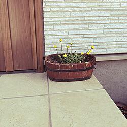 花がある生活/ガーデニング/玄関前の階段/玄関前 ガーデニング/玄関前...などのインテリア実例 - 2019-04-09 08:30:04