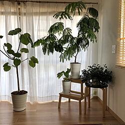 IKEA/観葉植物/築45年以上/エバーフレッシュ/リノベーション...などのインテリア実例 - 2020-06-02 16:27:30