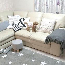 部屋全体/ソファ/トイプードルと暮らす/愛犬アニー❣️/ニトリのソファー...などのインテリア実例 - 2020-04-03 01:09:43