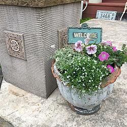 お花が好き/お花のある暮らし/ガーデニング/ガーデニング雑貨/輸入住宅のインテリア実例 - 2020-06-03 16:37:02