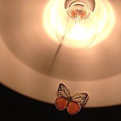 壁/天井/ニコアンド.../照明/雑貨のインテリア実例 - 2013-04-15 00:02:06