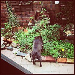 玄関/入り口/植物/ガーデニング/庭のインテリア実例 - 2014-02-11 15:40:33