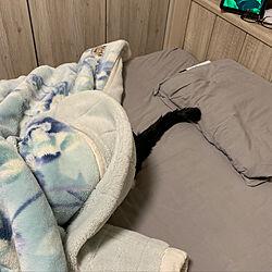 ベッド周り/はちわれ猫/ねこと暮らす/ねこのいる暮らし/猫...などのインテリア実例 - 2020-07-14 19:42:16