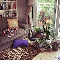 リビング/ペンドルトン/観葉植物/IKEA/植物...などのインテリア実例 - 2015-08-28 07:26:49