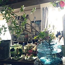 キッチン/RC山口♡/グリーンのある暮らし/いいね、フォロー本当に感謝デス☺︎/インスタ☺nana_arietta...などのインテリア実例 - 2018-08-04 09:49:45