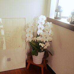 玄関/入り口/植物/大好きなジョン・レノン。/手作り/初投稿です。よろしくお願いします☺...などのインテリア実例 - 2015-01-26 20:13:42