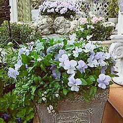 玄関/入り口/ガーデニング/ウッドデッキ/花のある暮らし/ガーデン...などのインテリア実例 - 2016-04-01 09:30:39