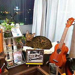 アンティーク/アンティークという名の猫/コメントめっちゃ長い(笑)/秋色/DIYって素敵ですね...などのインテリア実例 - 2019-10-07 19:10:17