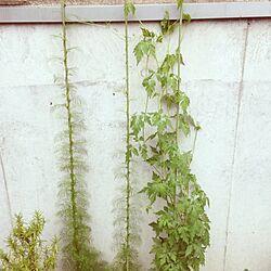 玄関/入り口/花壇の花のインテリア実例 - 2013-07-24 17:56:35
