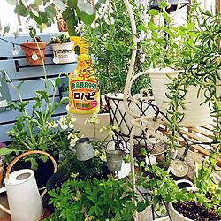 棚/ガーデニング/植物のある暮らし/害虫対策/アースガーデン...などのインテリア実例 - 2021-05-16 09:33:47