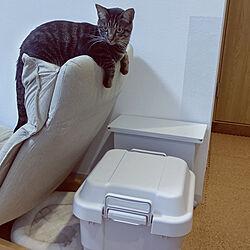 部屋全体/保護猫/猫と暮らす。/猫ばかりですみません/ニトリ...などのインテリア実例 - 2020-06-29 13:38:32