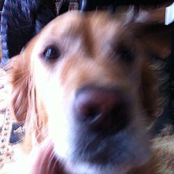 puppyのインテリア実例 - 2013-02-10 23:06:13