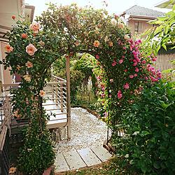 薔薇/フラワーアーチ/ばらが咲きました♡/薔薇が満開♡/外出自粛...などのインテリア実例 - 2020-05-12 07:46:51