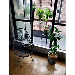 ベランダガーデニング/ベランダ/一人暮らし/窓辺のインテリア/窓辺のグリーン...などのインテリア実例 - 2020-07-18 15:26:14