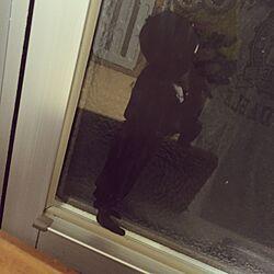 リビング/切り抜き/マッキー/コピー用紙/身近なおしゃれ...などのインテリア実例 - 2015-06-28 19:42:39