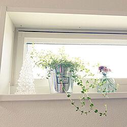横長窓/白い窓枠/セダム/一輪挿し/戸建て...などのインテリア実例 - 2021-05-17 07:30:16