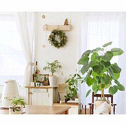棚/窓辺のグリーン/ウンベラータ/リース/クリスマス...などのインテリア実例 - 2018-12-15 23:20:52
