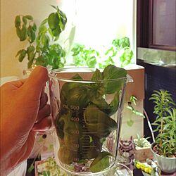 キッチン/NO GREEN NO LIFE/DIY/植物/IKEA...などのインテリア実例 - 2015-05-23 22:14:46