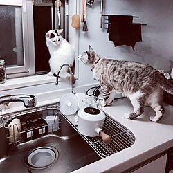 キッチン/モノトーン/無印良品/猫のいる部屋/ホワイトインテリアのインテリア実例 - 2017-04-18 01:02:16
