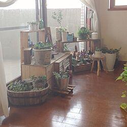部屋全体/室内ガーデニング/DIY棚/リメイクまな板/花台のインテリア実例 - 2013-07-24 08:32:11