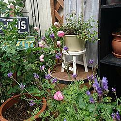 キッチン/庭/ガーデン/ガーデニング/西の庭...などのインテリア実例 - 2020-05-24 13:59:20