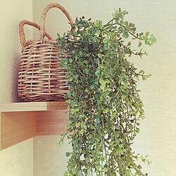 フェイクグリーン/いなざうるす屋さん/壁にかけられる観葉植物/無印良品/壁につけられる棚...などのインテリア実例 - 2016-11-19 15:57:32
