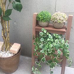 玄関/入り口/ベランダ/フェイクグリーン/観葉植物/ナチュラル...などのインテリア実例 - 2019-04-23 23:57:50