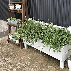 1×4材/ベンチDIY/プランターDIY/花壇 手作り/植物のある生活...などのインテリア実例 - 2019-09-18 18:04:27