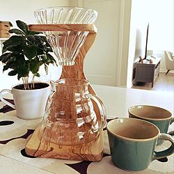 コーヒーの木/コーヒーカップ/HARIO ドリッパー/北欧/北欧モダン...などのインテリア実例 - 2020-04-03 02:35:45