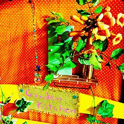 ベッドの柵リメイク/ドアオブジェ手作り/青い鳥サンキャッチャー/ガーデンキッチン/道端のお花...などのインテリア実例 - 2021-06-20 02:31:30