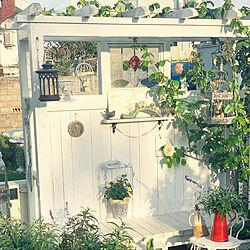 花/ガーデン/ナチュラルガーデン/夕焼け/パーゴラ...などのインテリア実例 - 2019-05-23 23:20:16