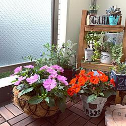 サンパティオ/サンパチェンス/サカタのタネ/花のある暮らし/ガーデニング...などのインテリア実例 - 2021-06-24 17:32:35