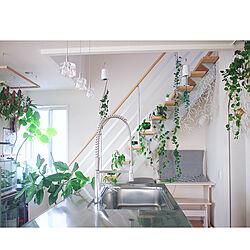 インドアグリーン/ウンベラータ/クリスマスインテリア/ソフトジャングル/植物のある生活...などのインテリア実例 - 2020-12-18 12:22:26