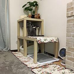 ペットアパート/IKEA/ネコと暮らす/犬猫と暮らす/ナチュラル...などのインテリア実例 - 2017-11-18 09:58:20