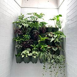 お風呂場/植物のある暮らし/壁面緑化/壁面緑化推進中/外人住宅風...などのインテリア実例 - 2021-05-09 15:44:59
