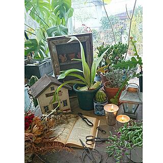 部屋全体/2019.2.23☀/インスタ→zhukimizi/小さなサンルームで/観葉植物のある暮らし...などのインテリア実例 - 2019-02-23 11:51:05