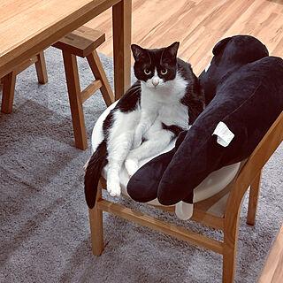 机/ペットと暮らすインテリア/猫と暮らす/猫ばかりですみません/猫大好き...などのインテリア実例 - 2021-05-18 07:02:26