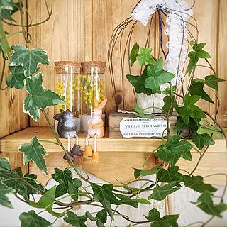 観葉植物/ナチュラル/Mimiちゃんの作品/ヘデラ/ナチュキチ...などのインテリア実例 - 2019-04-24 19:54:23