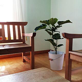 部屋全体/植物/ウンベラータ/IKEA/バケツ...などのインテリア実例 - 2016-05-24 08:21:55