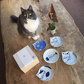 女性一人暮らし1DK、実家猫に関するmangomilkさんの実例写真
