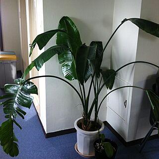 、観葉植物 テレビがしょぼいwに関するさんの実例写真