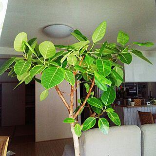 リビング/植物のある暮らし/3coins♡/ダイソー♡/リメイクシート 板壁風...などのインテリア実例 - 2017-05-02 10:29:45