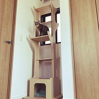 女性家族暮らし、猫と暮らす*に関するmpwさんの実例写真