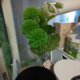 キッチン/観葉植物/100均/ダイソーのインテリア実例 - 2019-11-17 12:22:56