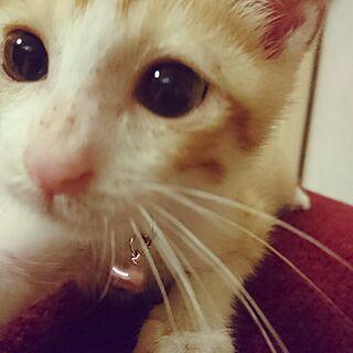 猫/レトロ/こねこ/もふり隊(●ↀωↀ●)✧/もふもふ...などのインテリア実例 - 2017-07-16 05:14:56