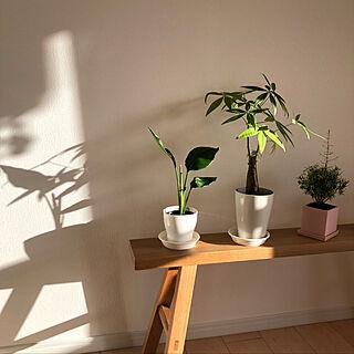 女性一人暮らし3LDK、観葉植物 無印良品に関するmakimikanさんの実例写真